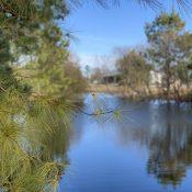winter around the pond 2