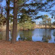 winter around the pond 3