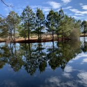 winter around the pond 7