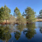 winter around the pond 9